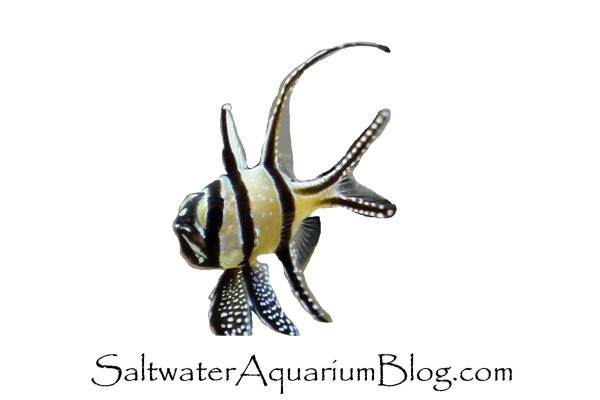 Saltwater Aquarium Blog Fish and Coral Blog Logo