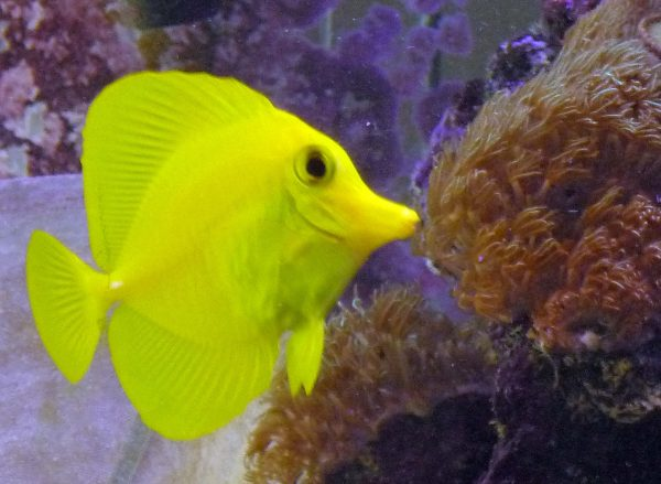 Pin Saltwater Fish on Pinterest