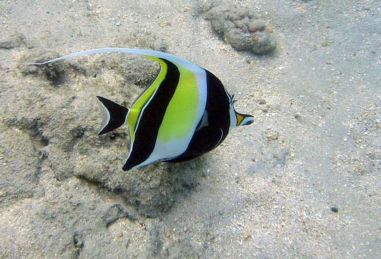 How To Keep The Moorish Idol