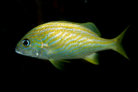 Recent Advances in Captive Breeding of Saltwater Fish
