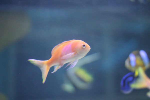 holiday gift giving guide for fish