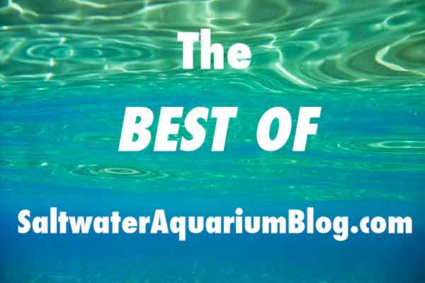 best of saltwater aquarium blog