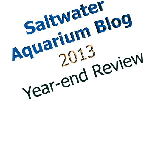 saltwater aquarium blog  saltwater aquarium blog 2013 year end review