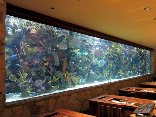 marine reef tank also known as a saltwater aquarium
