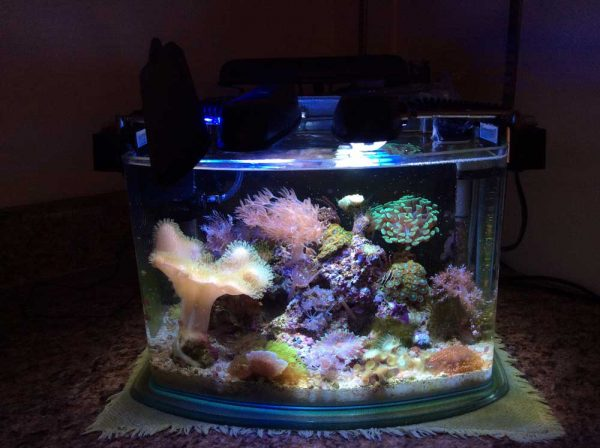 tank full of coral frags