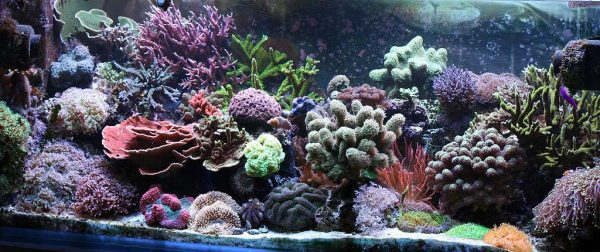coral reef aquarium by Tappinen