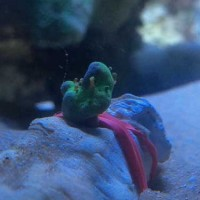 this is a coral frag I made 2 years ago