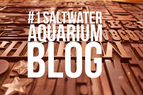#1 Saltwater Aquarium Blog