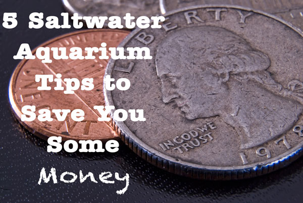 Saltwater Aquarium Tips to help you save money