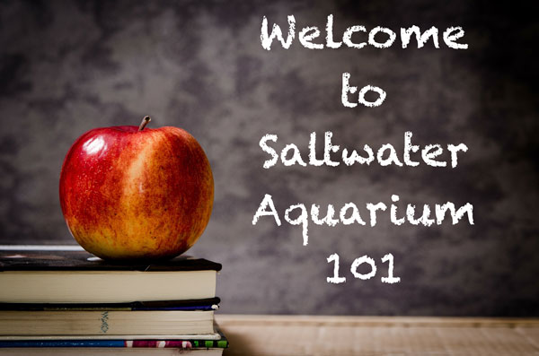 Welcome to Saltwater Aquarium 101