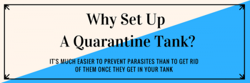 Why set up a quarantine tank?