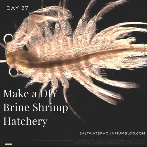 Build a DIY Brine Shrimp Hatchery