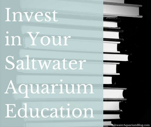 Invest in your saltwater aquarium education