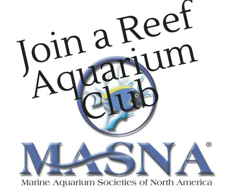 join a reef aquarium club