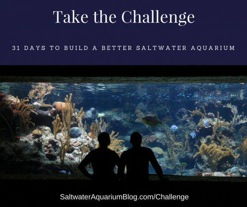 31 Days to Build a Better Saltwater Aquarium Challenge