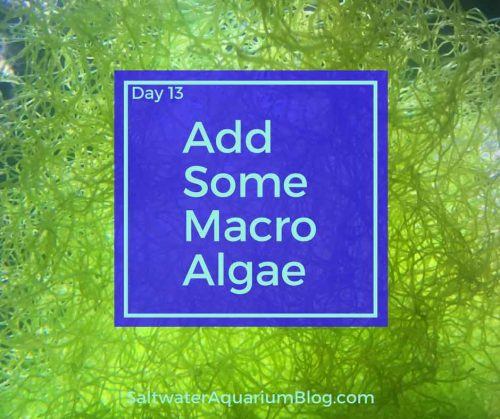 add some macro algae