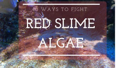 10 ways to fight red slime algae