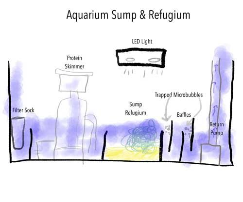 Aquarium sump and refugium design schematic